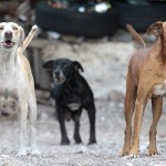 Dark Nights and Feral Dogs